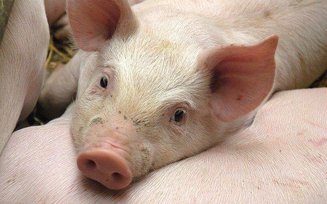 Γιάτρας | Τυποποίηση και Επεξεργασία Κρέατος